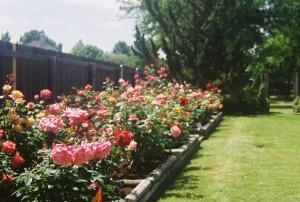 The East Rose Garden