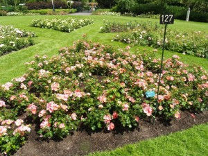 Hague Test Rose Gardens