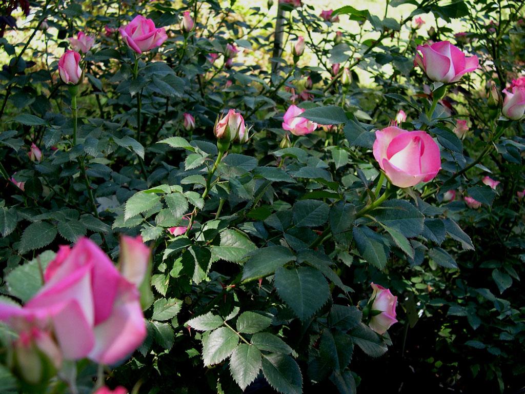 Joy Blooming in May