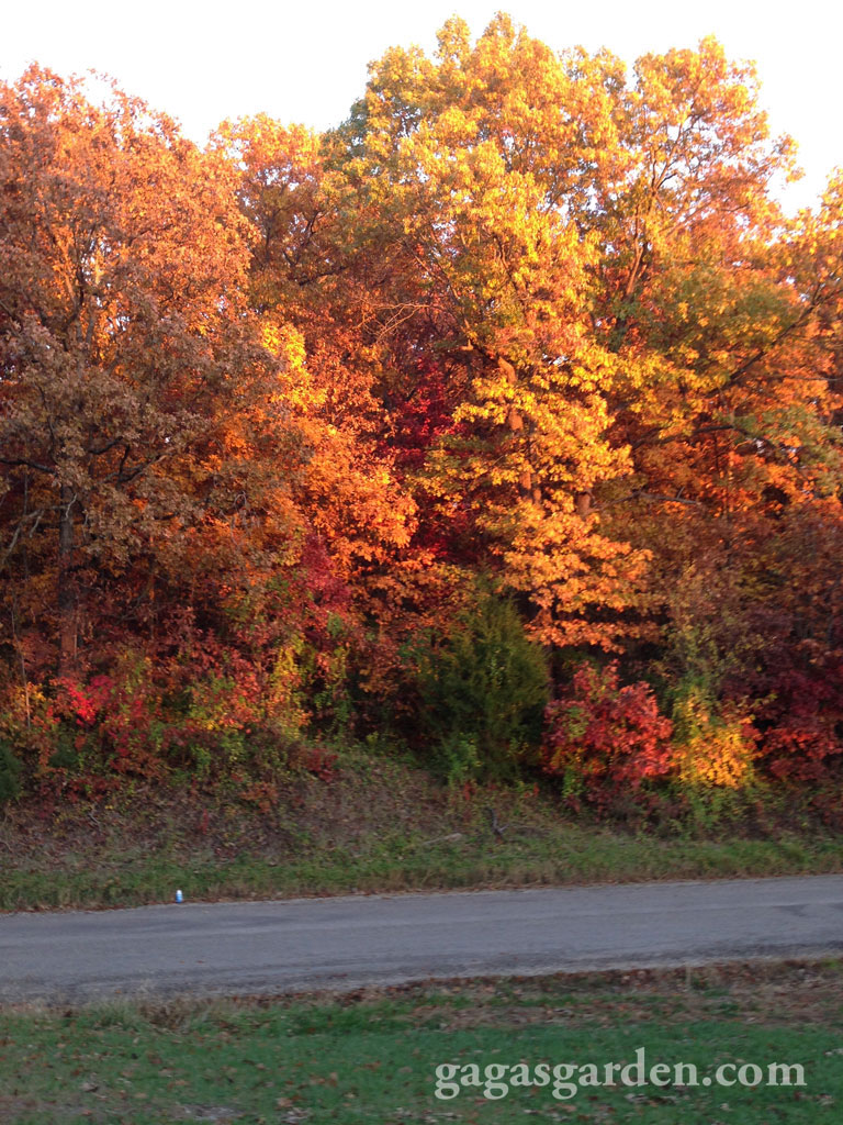 Our country lane at sunset in the fall