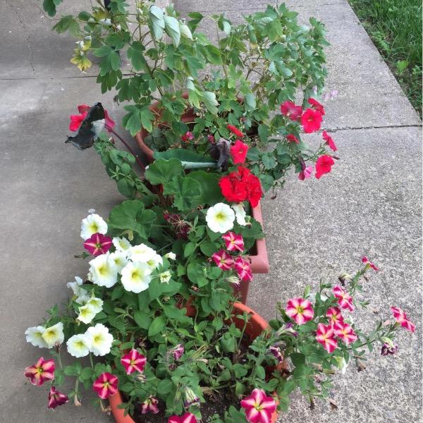 Margie's Container Plants
