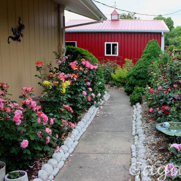 The Most Often Replicated Pattern: Gagas Garden Floribunda Rose Garden