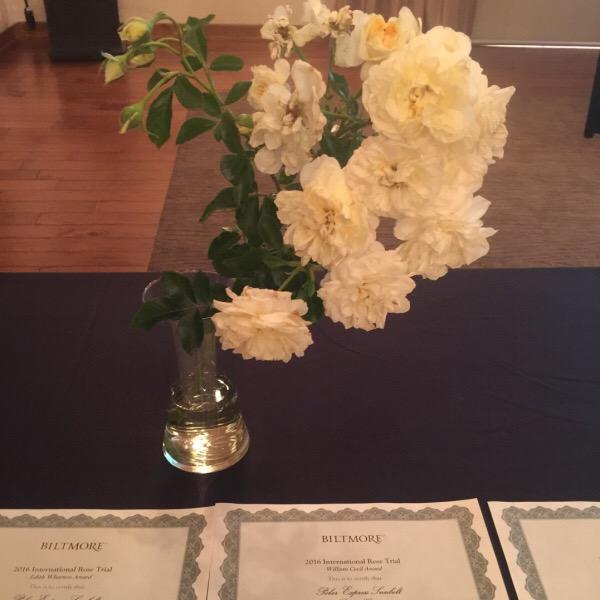 Polar Express™ Sunbelt® Rose   Sweeps the Show winning Best Floribunda   Best Growth Habit   Best Overall Rose