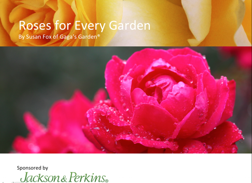 'Roses For Every Garden' This Year's Rose Presentation at Chicago Flower & Garden Show
