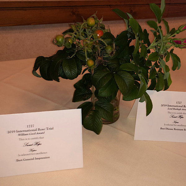 William Cecil Award' & 'Lord Burleigh Award; 'Best General Impression' & 'Best Disease Resistant' 'Sweet Kiss'